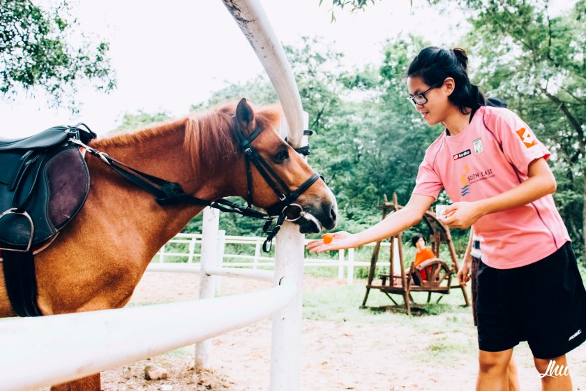 Punggol Ranch Resort Horse Feeding