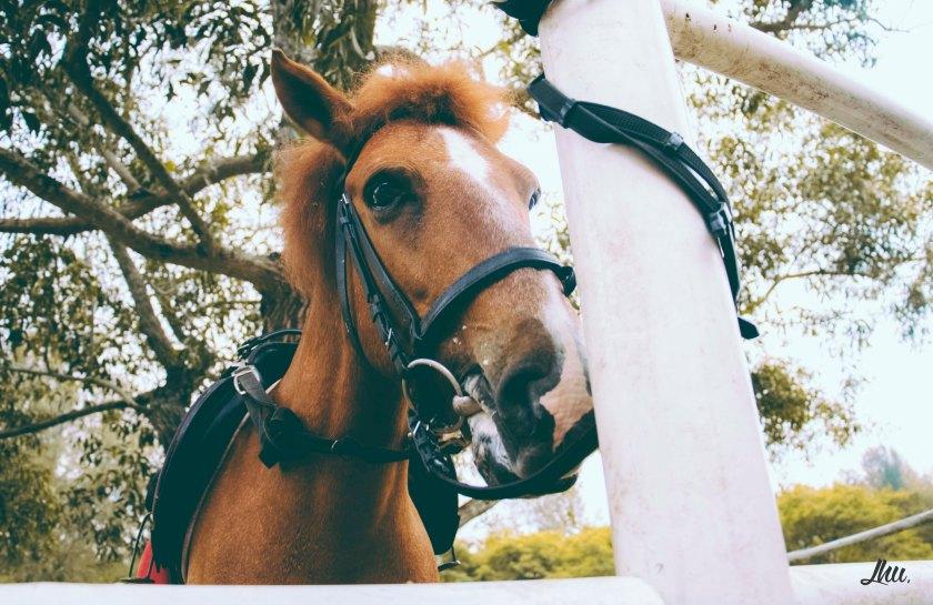 Punggol Ranch Resort Horses